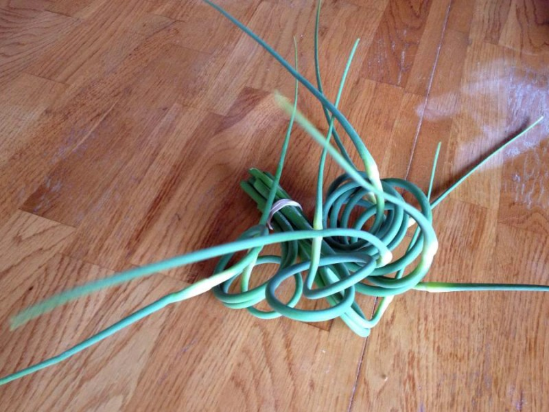 garlic scape curling shoots